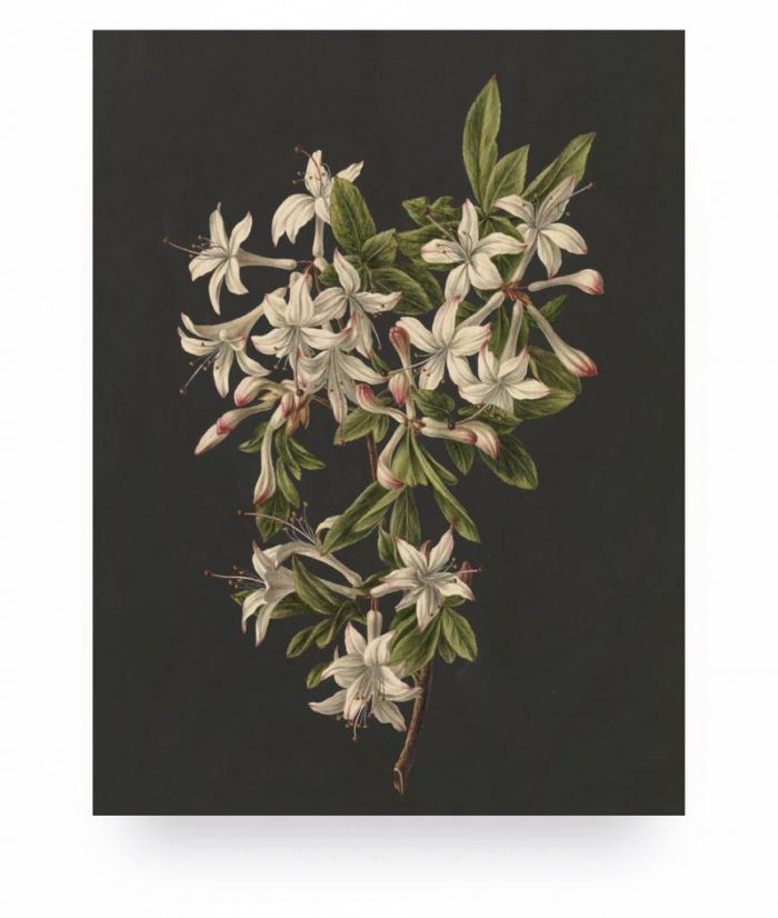 Wood print white flowers 2 small