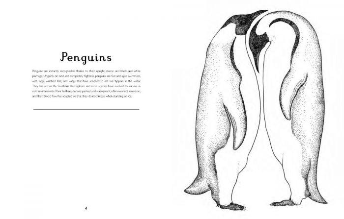 Animalium colouring book