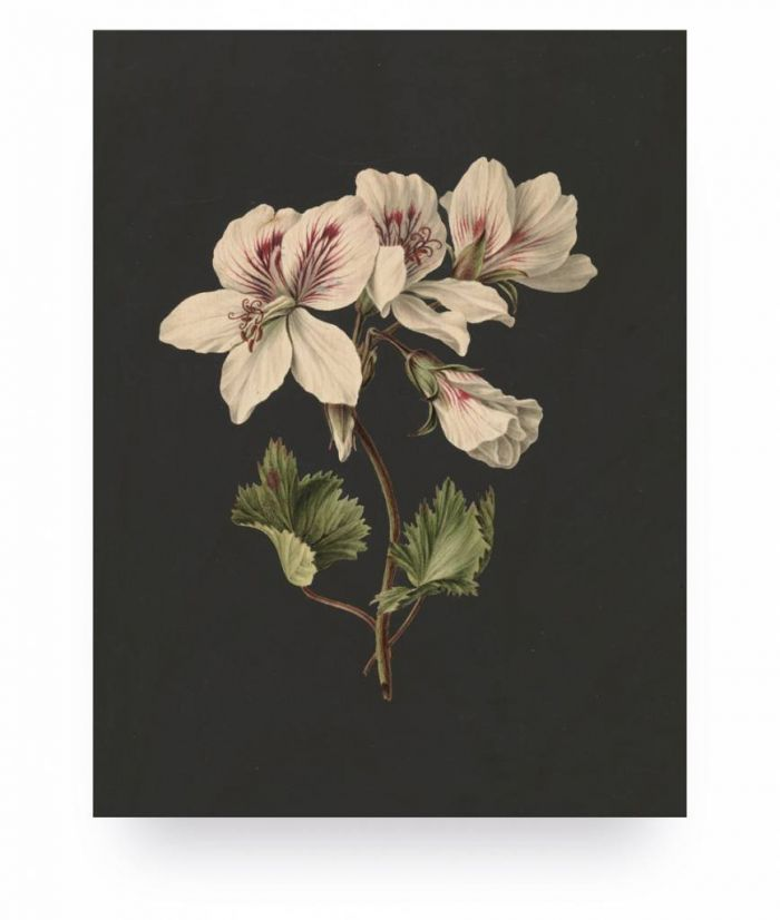 Wood print white flowers 1 small