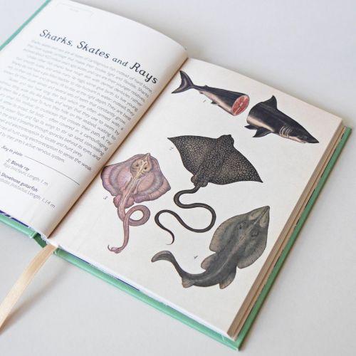 Animalium mini edition