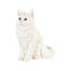 Coinbank cat white