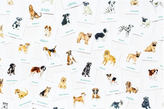 Dogs & puppies memory spel