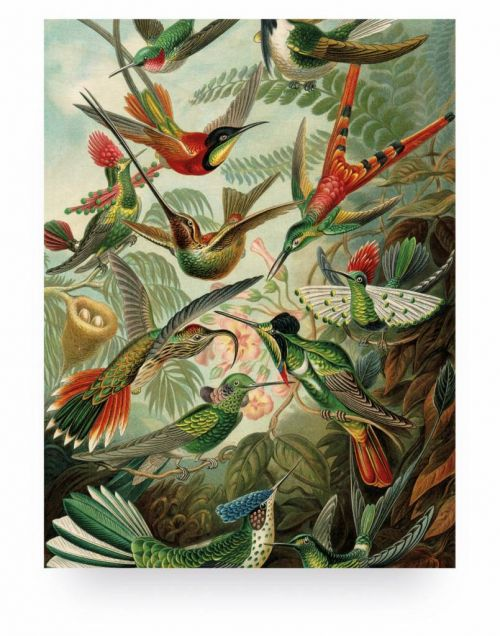 Wood print exotic birds medium
