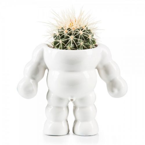 King cactus flower pot