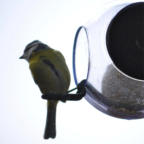 Birdfeeder with suction
