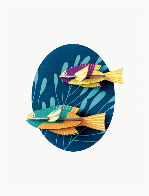 Wall decor spanish hogfishes