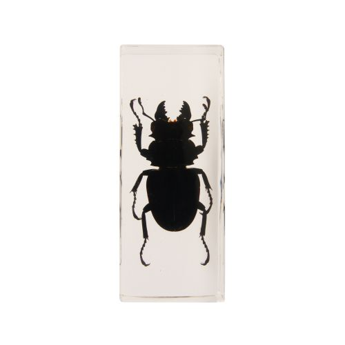 Black beetle in plastic