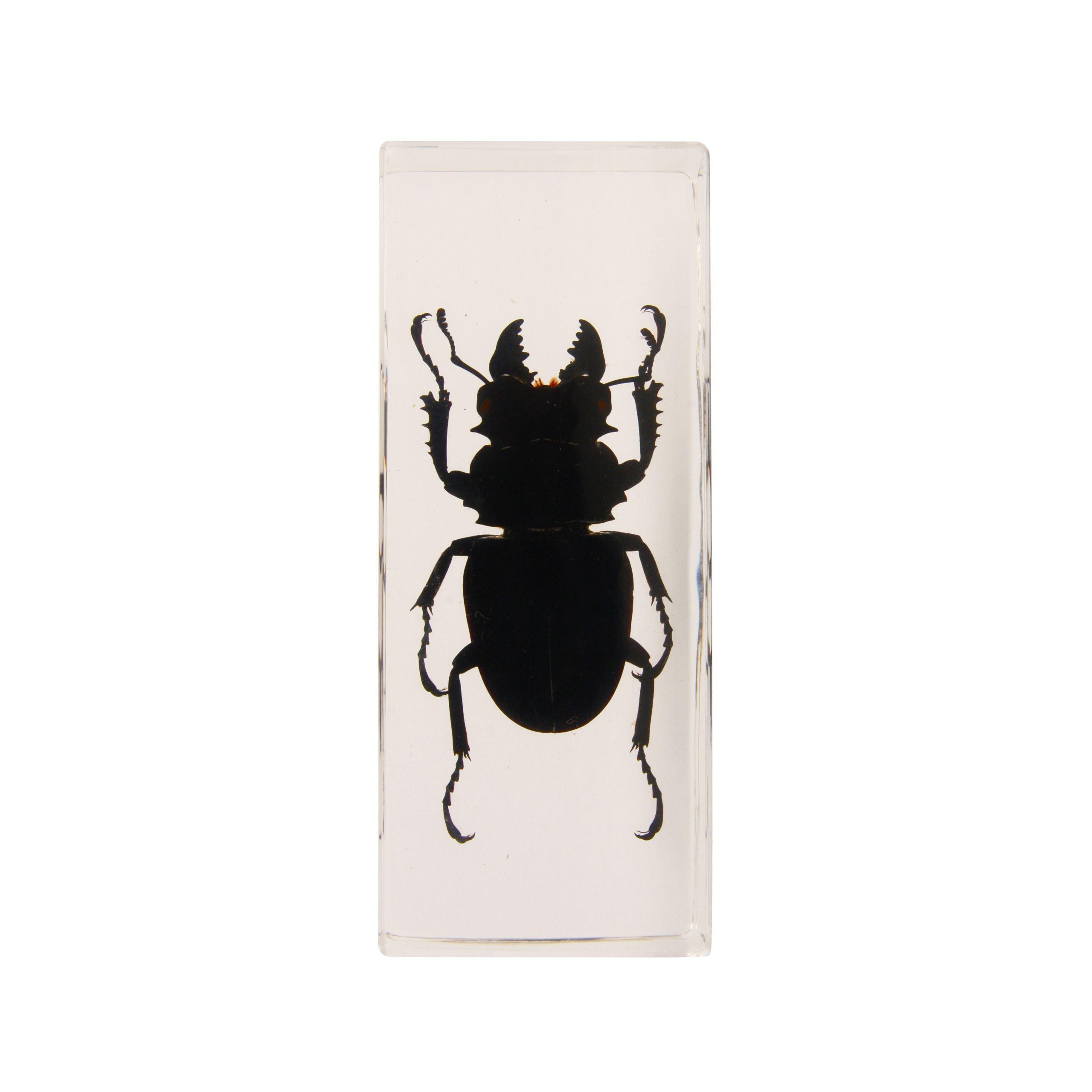 Black beetle in plastic
