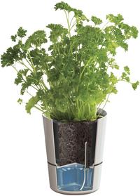 Hydro herbs pot twin grey